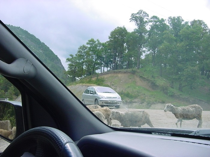 Los peligros de la carretera: animales sueltos
